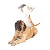 Jouer de chat et d'oiseau de chien Photographie stock libre de droits