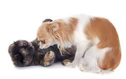 Jouer de chat et de chien Image stock