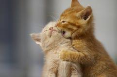 Jouer de chatons Photographie stock