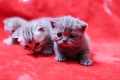 Jouer de chatons de bébé Images stock