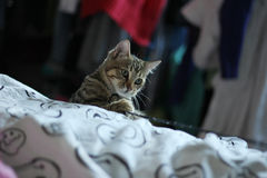 jouer de chats Photos libres de droits