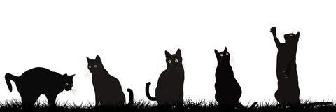 Jouer de chats noirs extérieur illustration stock