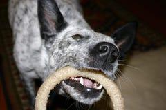 Jouer de chien Photos stock