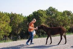 Jouer de jeune homme et âne sauvage d'alimentation, Chypre, région sauvage de protection d'âne de parc national de Karpaz Images libres de droits