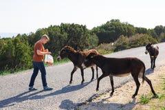 Jouer de jeune homme et âne sauvage d'alimentation, Chypre, région sauvage de protection d'âne de parc national de Karpaz Image libre de droits
