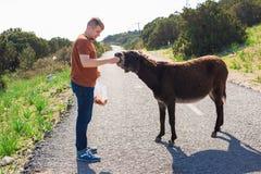 Jouer de jeune homme et âne sauvage d'alimentation, Chypre, région sauvage de protection d'âne de parc national de Karpaz Photographie stock libre de droits