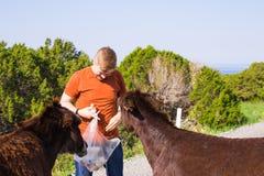 Jouer de jeune homme et âne sauvage d'alimentation, Chypre, région sauvage de protection d'âne de parc national de Karpaz Images stock