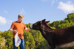 Jouer de jeune homme et âne sauvage d'alimentation, Chypre, région sauvage de protection d'âne de parc national de Karpaz Photos libres de droits
