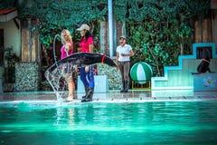 Jouer de lion de ‹d'†de ‹d'†de mer du KOH SAMUI de la THAÏLANDE le 8 avril 2013 Image libre de droits