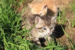 Jouer de petits chats Photo libre de droits