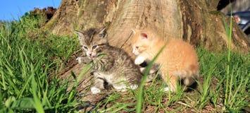 Jouer de petits chats Image stock