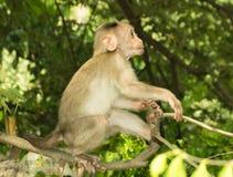 Jouer de singe Photographie stock