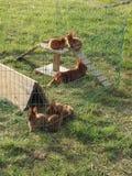 Jouer des lapins de satin de bébé Image libre de droits