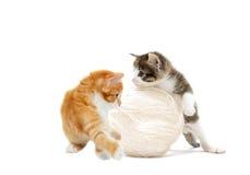 Jouer drôle de chaton Photographie stock libre de droits