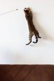 Jouer et saut de chat hauts sur le mur images libres de droits