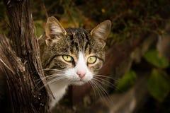 Jouer le cache-cache avec le chat mignon Photos stock