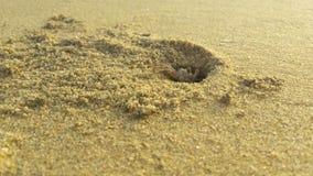 Jouer le cache-cache avec le crabe à la plage Image stock