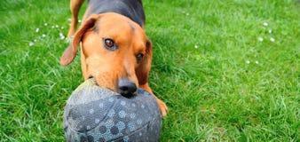 Jouer le chien Images libres de droits