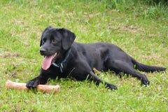 Jouer le chien avec le jouet Photographie stock libre de droits