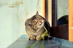 Jouer mignon curieux heureux de chat Photographie stock