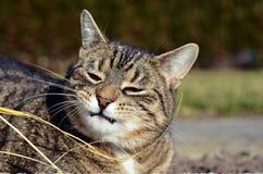 Jouer mignon de chat Photographie stock
