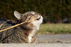 Jouer mignon de chat Photographie stock libre de droits