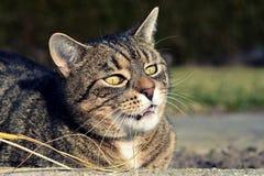 Jouer mignon de chat Photo stock