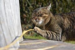 Jouer mignon de chat Photos libres de droits