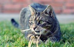 Jouer mignon de chat Images libres de droits