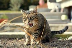 Jouer mignon de chat Photos stock
