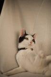 Jouer noir et blanc de chat Photo libre de droits