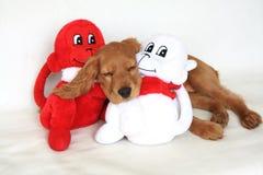 jouet anglais d'épagneul de crabot de cocker de chéri Images libres de droits