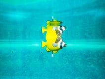 Jouet démodé de poissons dans la piscine Photo stock