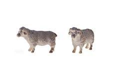 Jouet d'isolement de moutons Photos stock