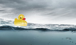 Jouet de canard Photo libre de droits