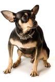 jouet de chien terrier Photographie stock libre de droits