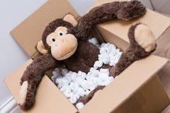 Jouet de singe dans une boîte Photos stock
