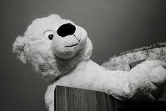 Jouet de Teddy Bear images libres de droits