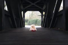 Jouet et cadeau bourrés d'ours sur un pont Photo libre de droits