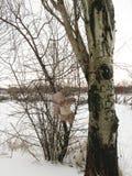 Jouet jeté dans la forêt photographie stock libre de droits