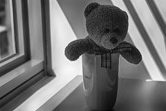 Jouet monochrome d'ours avec la tasse se reposant par la fenêtre dans les ombres Photographie stock libre de droits