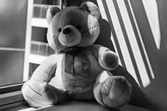 Jouet monochrome d'ours se reposant par la fenêtre dans les ombres Photos libres de droits