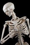 Jouet squelettique humain Image libre de droits
