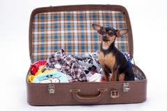 Jouet-Terrier dans la valise pour le voyage Images stock