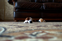 Jouets abandonnés Photographie stock libre de droits