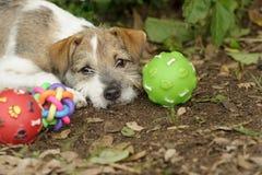 Jouets de chien photos stock