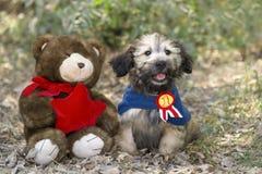 Jouets de chien images libres de droits