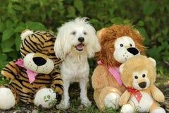 Jouets de chien photographie stock