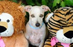 Jouets de chien photo libre de droits