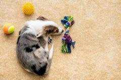 Jouets de Flatlay, de chiot et de chien se trouvant à un plancher brun, copyspace photographie stock